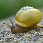 Small Snail by lynn carter