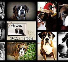 Images Of Arwen by Evita