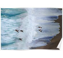Gliding Over Beach Poster