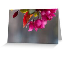Hanging Pink Blossoms At Victoria College Greeting Card