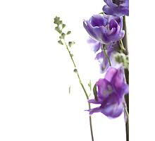Purple Delphinium by AlysonArtShop