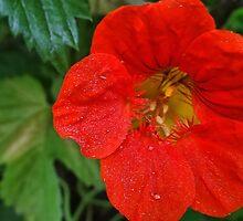 In a garden 14 by vigor