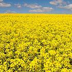 Yellow by thejourneysofar