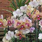 Gardens of the World - Orchids III by orko