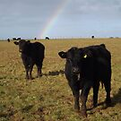 A rainbow over the paddock. by Esther's Art and Photography