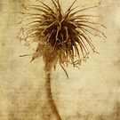 Crown of Thorns iPhone case by John Edwards