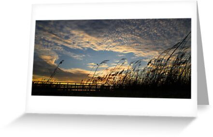 Salgados Wetlands at dawn by A3Art
