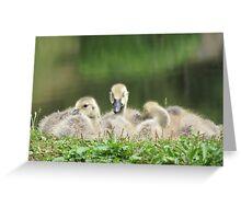 Three Goslings Greeting Card
