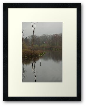 New England Swamp by Barry Doherty