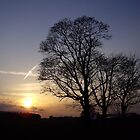 Three Tree Silhouette by Martin McKiernan