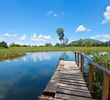 Wetland in Hong Kong by kawing921