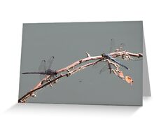 Double Dragons Greeting Card