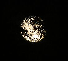 Moon Behind The Trees by Cynthia48
