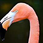 Flamingos by pcfyi