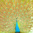 Proud as a Peacock by Ashley  Langtry