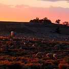 Sundown On The Range by Arla M. Ruggles