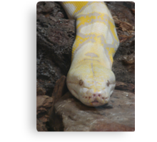 """White Boaconstrictor""  by Carter L. Shepard Canvas Print"