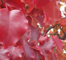 Fall Leaves Red Heart by elizabethtarde