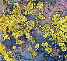 Lichen  by clare winslow
