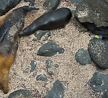 Sea Lion & Pup4 by bulljup