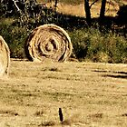 ROUND  BALES OF  HAY by jainiemac