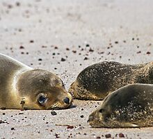 Sea Lion Pups by bulljup
