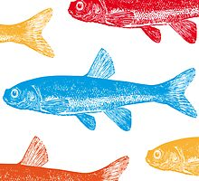 Colourful Fish Card & Prints by M  Bianchi