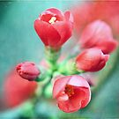 Textured Chaenomeles Japonica by Astrid Ewing Photography