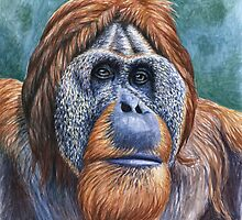 The Orang Utan by Nicole Zeug
