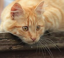 Smudge on Fence by LisaRoberts