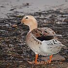 Water Off A Ducks Bottom by julieapearce