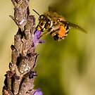 To bee or not to bee by AntonAlberts