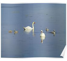The Progress Of The Swan Family Poster