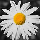Daisy Sunshine by Stan Owen