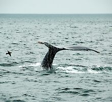 Humpback with bird by Peter Dickinson