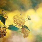 Something Yellow by cmcdonald
