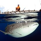 The Whalesharks of Indonesia by Steve Jones