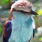 Racket Tailed Roller by Tamara  Kaylor