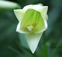 Slowly Opening by Lorelle Gromus