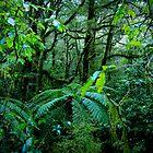Kiwi Jungle 1 by Adam Northam