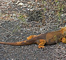 Land Iguana2 by bulljup