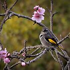 A Crescent Honey Eater by Maureen Johnston