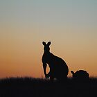 Kangaroo at Dusk in Silhouette - Whittlesea, Victoria by Heather Samsa