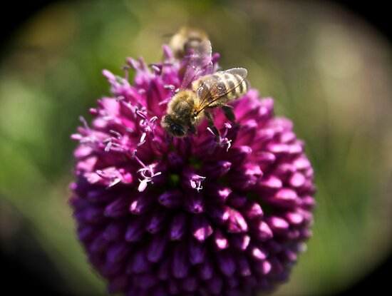 Bee by James Taylor