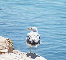 Seagull, Marina Albufeira by colettelydon