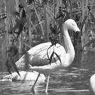 Flamingo fauna by Hannah Clair Phillips