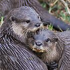 Loving Otters by dtfrancis15