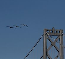 Let's Skip the Bridge Today by fototaker