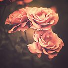 Three Pink Roses (Vintage Flower Photography) by Andreka