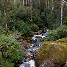 West Tyers Creek by Janette Rodgers
